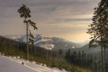 Králický Sněžník, přírodní rezervace